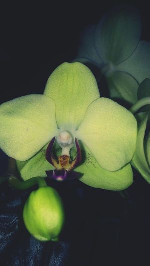 Orchids Orchid Fortheloveofflowers Eyemnaturelover Blooming AndroidPhotography
