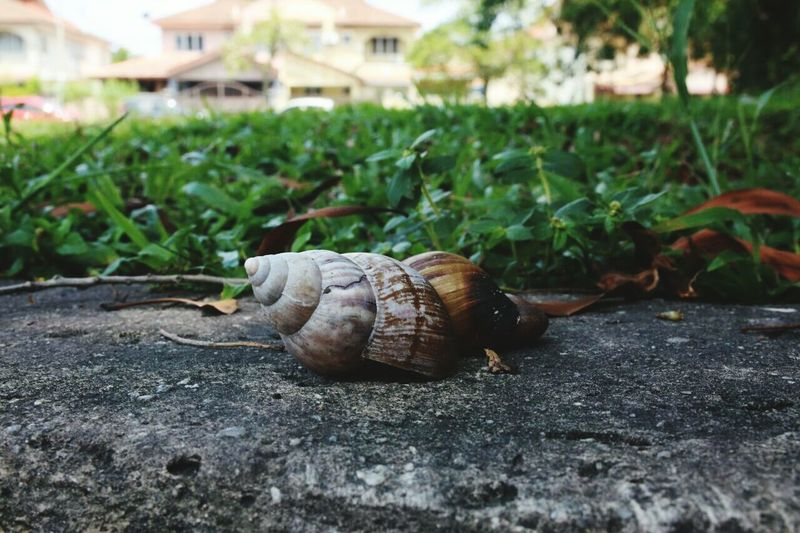 snail Animals In The Wild Nature Animal Themes Close-up Snailshell Snail Closeup