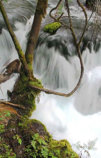 Tree Scenics - Nature Beauty In Nature Water Long Exposure Nature Waterfall Forest No People Tranquility Branch Flowing Water Tranquil Scene Outdoors Power In Nature Flowing Water