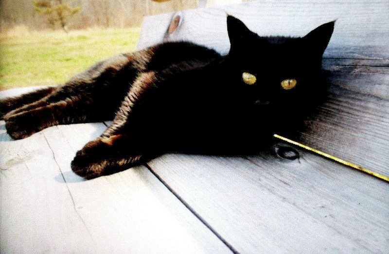 Cat♡ Catoftheday BLackCat Cateyes Catpaws Cattail Catlife Catlover ♡ Cataholic Catlady CatLadyForlife EyeEm Animal Lover Ilovemycat