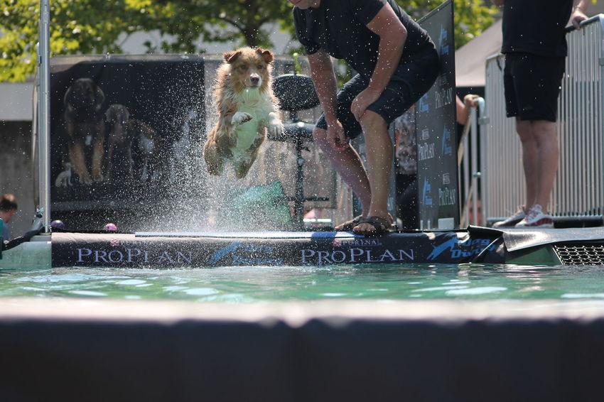 Dog Jumping EyeEm Selects Water Spraying Swimming Pool City Water Slide Motion Low Section Fun Splashing Fountain