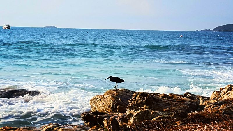 Sea Bird Animals In The Wild Animal Themes No People Animal Wildlife Nature Beauty In Nature Perching Outdoors Horizon Over Water Water Day Sky Wave