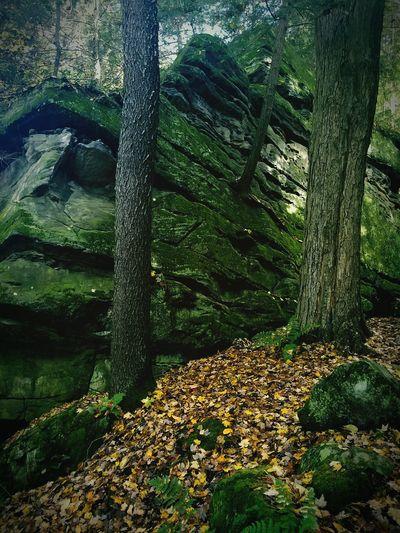 Nature Outdoors Autumn Leaves Leav