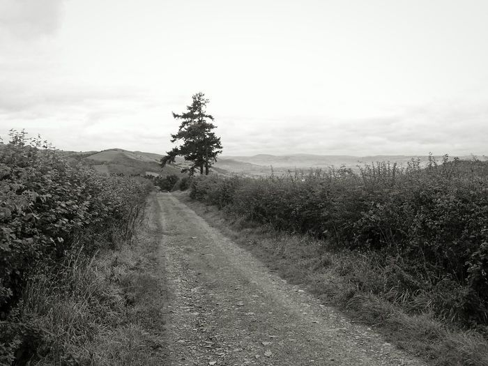 A Country Road ... Roads Black And White Wales Newtown Powys Beautiful Landscape Hills Melancholic Landscapes Trees