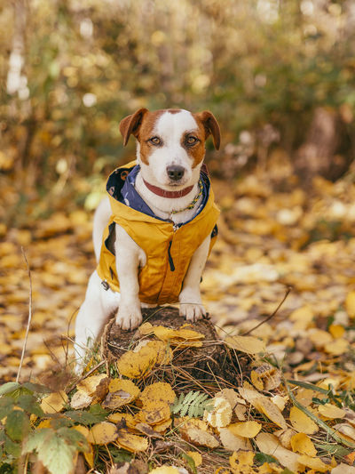 Portrait of dog sitting on ground during autumn