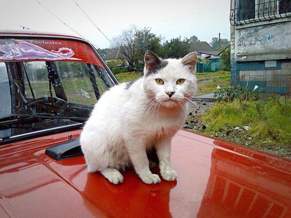 Cats Cat♡ Cat Homeless Cats
