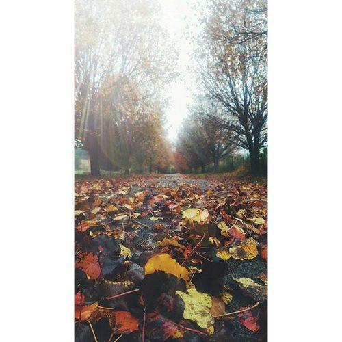 Fallweather Fall Leaves November HTers Hashtags Ps Amazing Art Artistic Bestphoto Colorfull Colors Cool Instaphoto Instapic Instashot Ph Photo Photograph Photography Photooftheday Photos Photoshop Photoshot photowall picoftheday