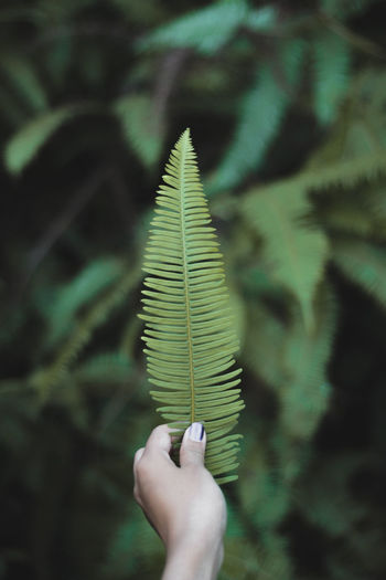 Cropped image of hand holding fern leaves