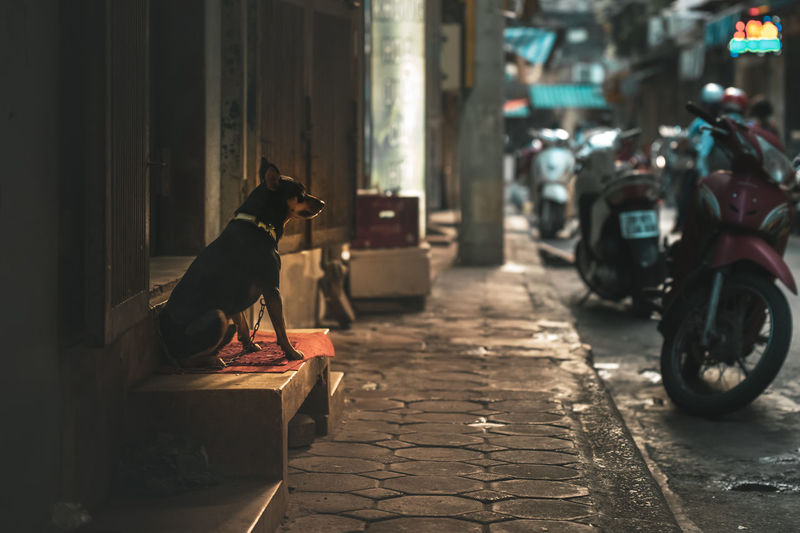 Dog sitting on street in city