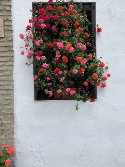 Pink flowering plants on wall