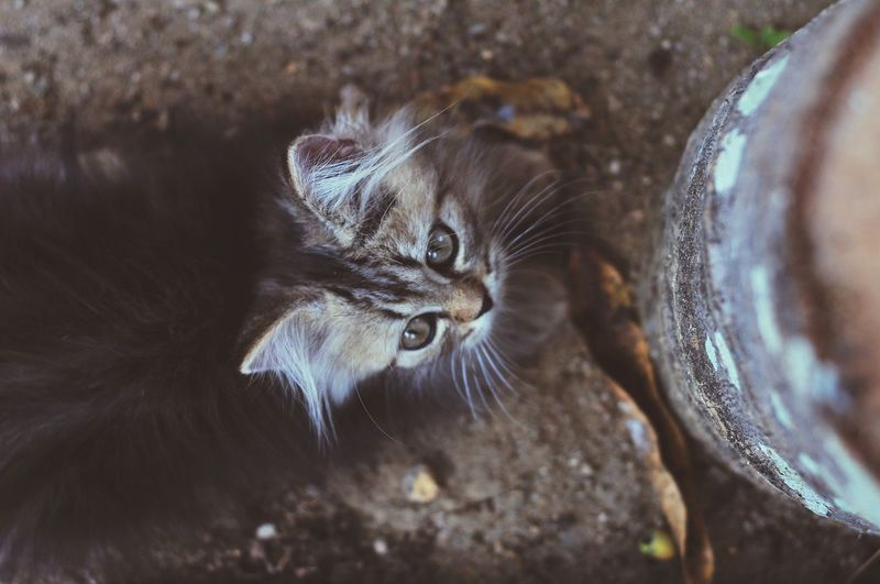 Animal Themes Persian Cat  Cat Lovers Cats Of EyeEm Cats 🐱 Kitten 🐱 Pets Portrait Feline Domestic Cat Whisker Cute Looking At Camera Animal Hair Close-up Animal Eye Cat Kitten Animal Face Animal Head  Animal Nose Alertness Yellow Eyes HEAD Eye