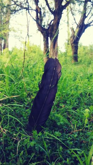 Nature feather First Eyeem Photo