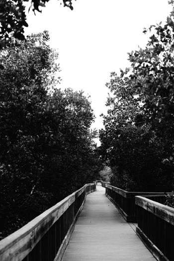 Tree Railing Outdoors The Way Forward No People Day Low Angle View Clear Sky Nature Growth Footbridge Sky