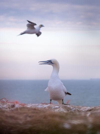 Seagull flying over sea against sky