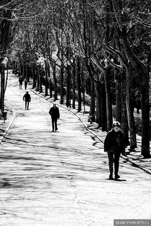 City Cold Temperature Group Of People Lifestyles Nature Park People Plant Real People Rear View Tree Walking Winter