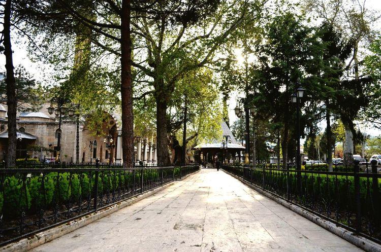 Sidewalk Streetphotography TreePorn Green Green Green!  Natural Beauty Springtime Urban Geometry The Human Condition