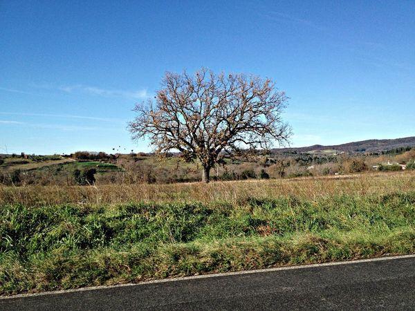 L'albero (the tree) Albero TreeBikeride Riaño