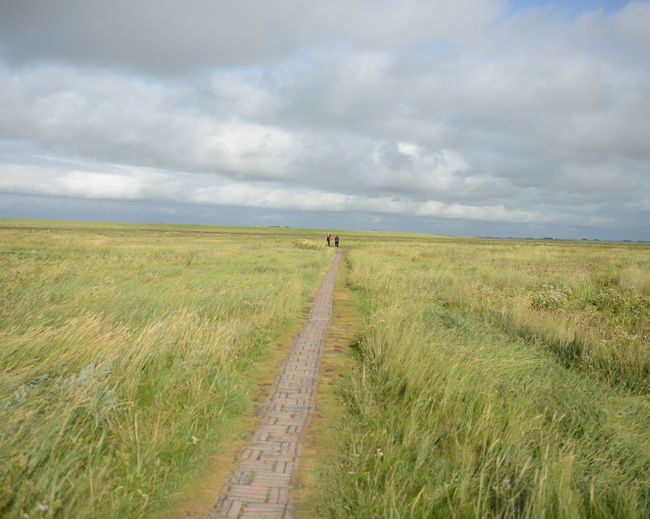 Focal Point One Point Perspective St. Peter Ording Marshland  Nordseeküste People Clouds And Sky Horizon Windy Salzwiesen
