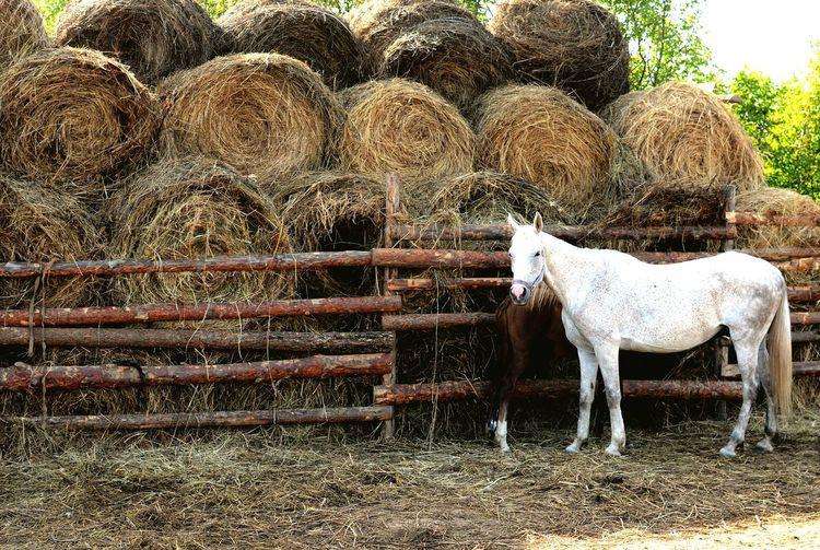 Horse in zoo