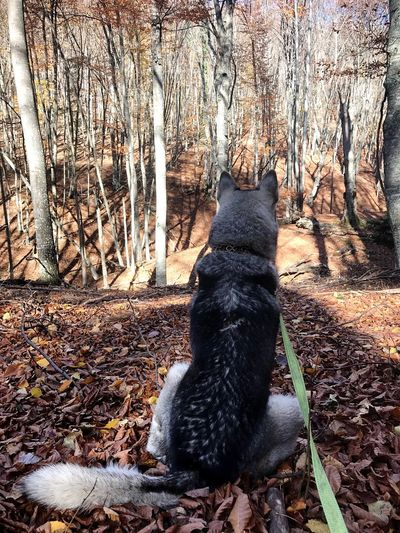 Looking deer...