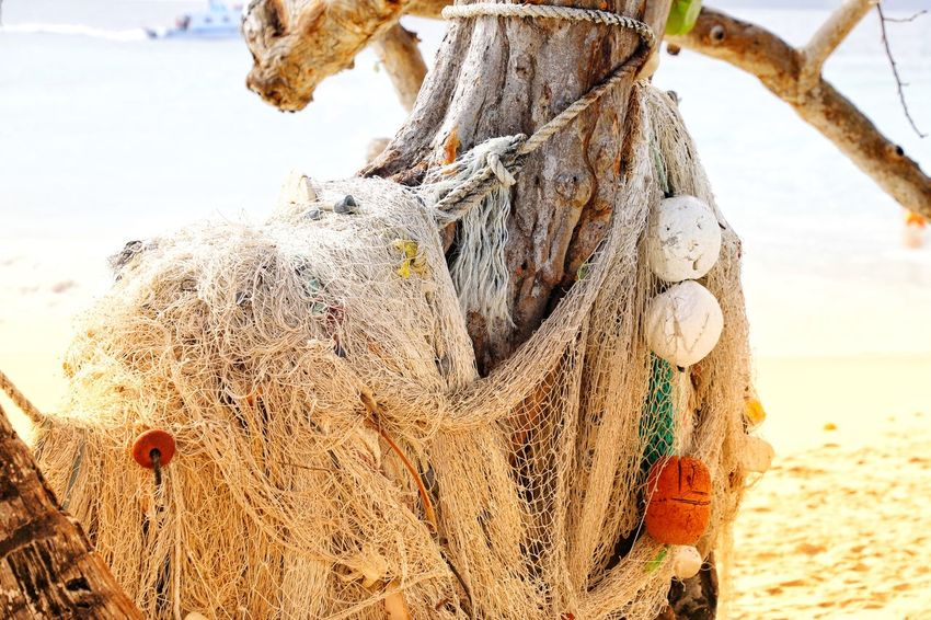 Fishing nett at a tree Caribbean Island Caribic  Cayo Levantado Fischernetz Dominikanische Republik  Dominican Republic Net Fishing Net Sea Outdoors No People Nature Day Beach Close-up Fishing Equipment Water Beauty In Nature Sky