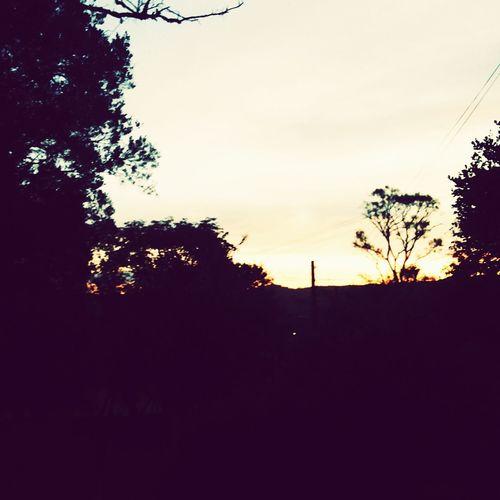 Sunset Through The Trees Sunday