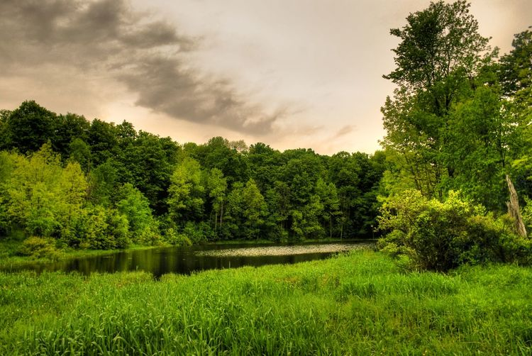 Serenity EyeEm Best Shots EyeEm Nature Lover EyeEmBestPics Nature Trees Canada Forest Swamp Ontario Caledon Sky