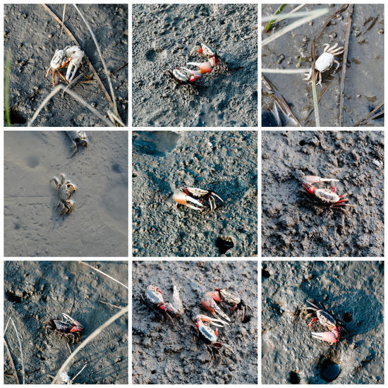 Mr. Krabs Animal Themes Close-up Collage Day Large Group Of Animals Leaf Multiple Image Nature No People Outdoors 螃蟹