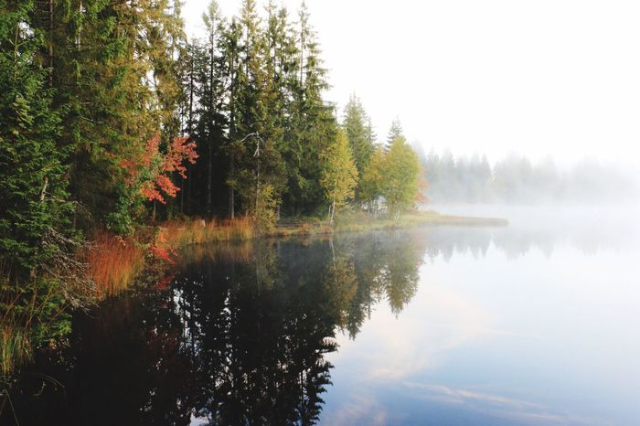 Tree Reflection Autumn Nature Beauty In Nature Water Tranquility Lake No People Outdoors Fog
