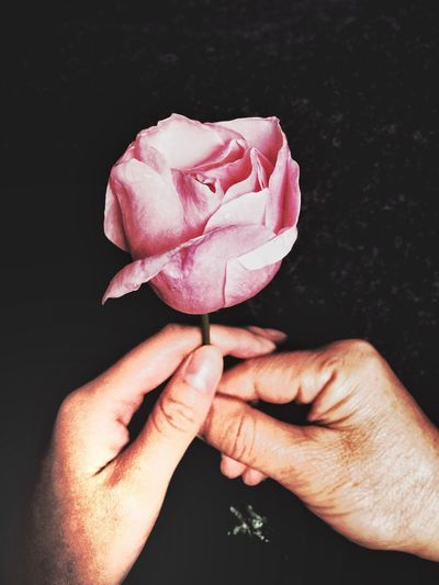 Flower Human Hand Black Background Petal Fragility Studio Shot Holding Close-up Pink Color Nature Best Wishes Today Is My Mothers Birthday Memory Birthday Love Beauty In Nature Human Body Part Freshness One Person Outdoors People Day