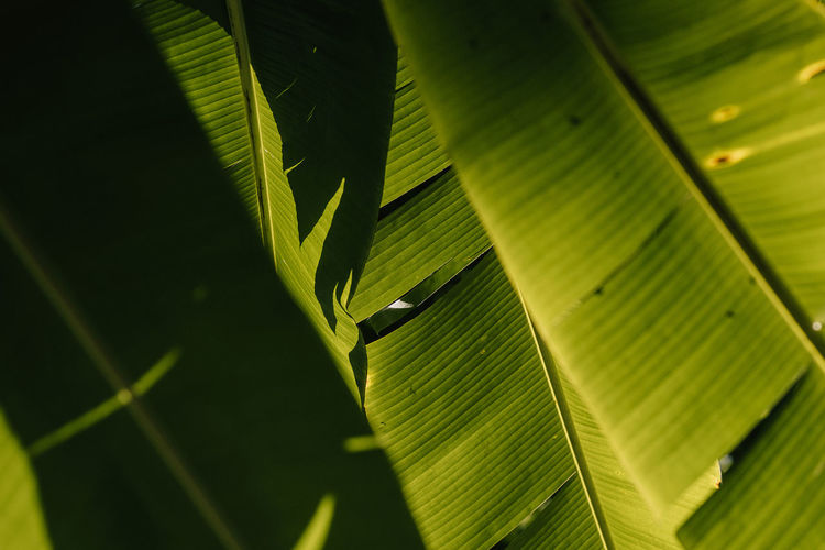 Palm Leaf Palm Tree Rio Rio De Janeiro Sunlight Banana Leaf Beauty In Nature Day Green Color Light And Shadow Nature No People Parque Lage Plant Sun Rays An Eye For Travel