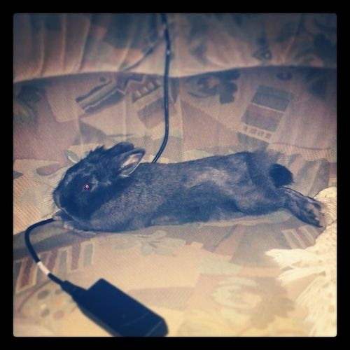 Yes! like this 공주 토끼 Tavşan Bunny  ...