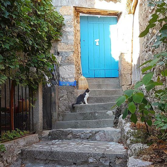 Sud France Chat village vacances tranquillité Tourisme Destination Vieille Ville Greoux Les Bains, France. EyeEm New Here