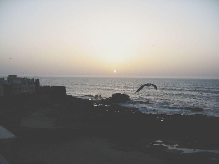 Sea And Sky Sunset EyeEm Best Shots Sunset Silhouettes