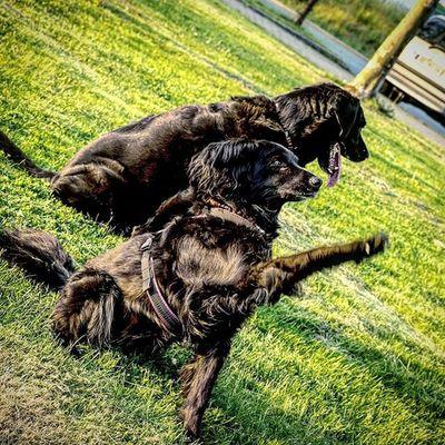 Mischling Jacky Hund Dogsofinstagram Dogs BlackDog Spaß Picoftheday Bestoftheday
