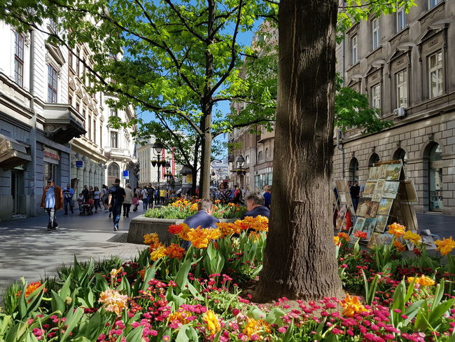 April Spring City Street Syreet Photography Street Photography Streetphotography Street Life Beograd Knez Mihajlova Prolece Flower Tree City Architecture Building Exterior Built Structure Blooming Large Group Of People