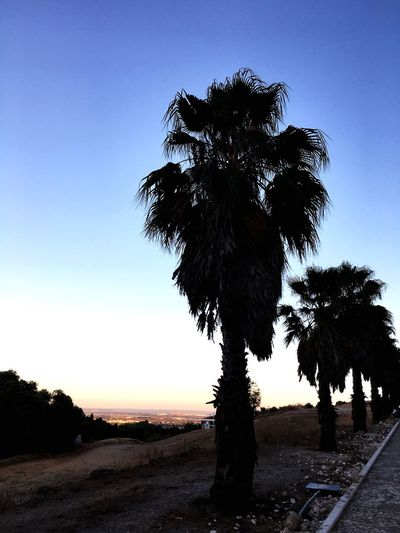 Palm Trees Sky Tree Nature Plant Clear Sky No People Outdoors Day Growth Silhouette Water Beauty In Nature Field Creativity Scenics - Nature Non-urban Scene Land
