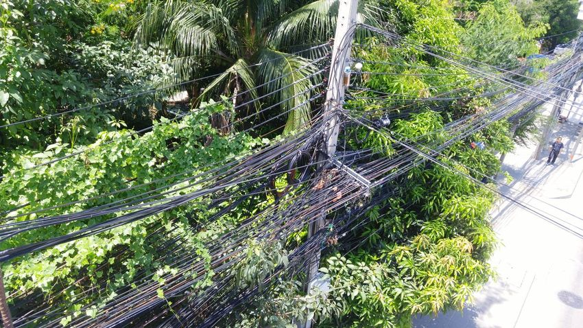 Tree Nature Growth Low Angle View Backgrounds Full Frame No People Beauty In Nature Green Color Close-up Forest Outdoors Day Spider Web Web Bangkok Bangkok Thailand Thailand Chaeng Wattana Pakkred Nonthaburi City Life Electricity  Electric Lines Goverment
