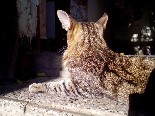 """Yami enjoying the daylight of the evening. This is his favorite spot """"The top stair"""" at home. Home Cat Close-up Daylight Domestic Cat Feline Indoors  Mammal"""
