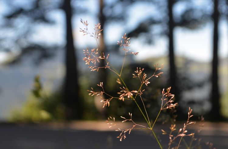 Save The World From My Point Of View EyeEm Nature Lover EyeEm Gallery Landscape_photography Plant Focus On Foreground Growth Nature Day Close-up No People Sunlight Beauty In Nature Outdoors Tree Selective Focus Tranquility Fragility Branch Leaf