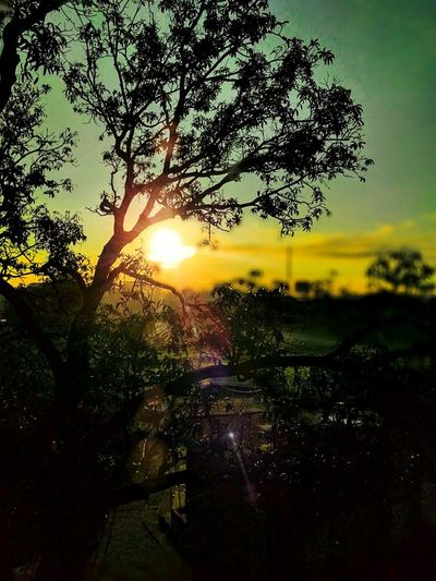 The Sun shade Sunset Sunset Silhouettes Sun ☀ Light And Shadow Orange And Black Eyeem Collection Nature_collection Sunset_collection Random Shot Outdoor Photography Showcase July Showcase July 2016
