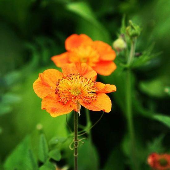 Оранжевое небо, оранжевое море, оранжевая зелень, оранжевый верблюд... цветы калининград Россия ботаническийсад балтика лето краски  Russia Color Nature Orange Flowers Green