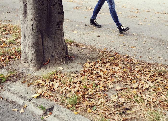 Autumn walk under the trees (Turin, Piedmont) Walking Walk Street Low Section Human Leg Leaf Plant Part Body Part Human Body Part Autumn Nature Tree Tree Trunk Shoe Lifestyles Land Trunk Falling Plant Change Outdoors Human Foot Leaves Jeans Torino
