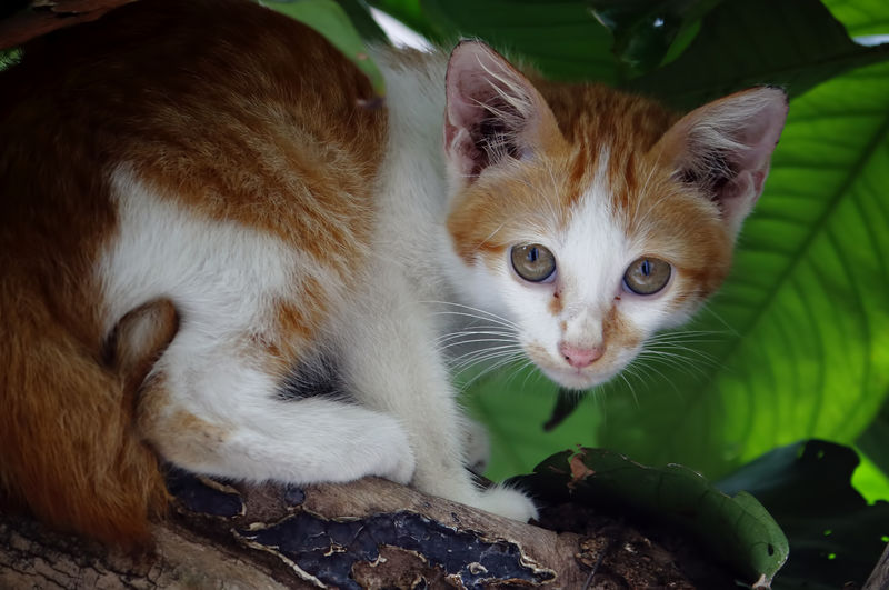 Cat Feline Mammal Domestic Cat Animal Themes Domestic Animals Pets Domestic Animal One Animal Vertebrate Looking At Camera Portrait No People Whisker Focus On Foreground Leaf Close-up Plant Part Young Animal Kitten Animal Head  Ginger Cat
