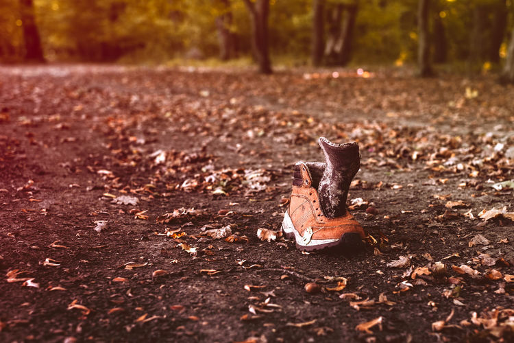 an brogue in the autumn forest Autumn Gaitero Shoe Autumn Brogue Brogues Change Close-up Day Dry Falling Field Footwear Forest Galoshes Land Leaf Leaves Nature No People Orange Color Outdoors Plant Part Selective Focus Sunlight Tree Wood - Material EyeEmNewHere