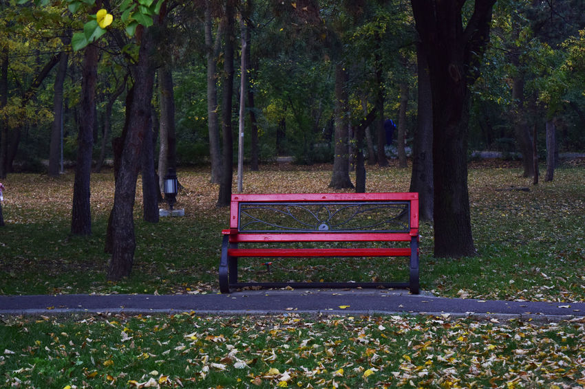 Absence Autumn Beauty In Nature Bench Change Day Growth Leaf Nature No People Outdoors Park - Man Made Space Scenics Tranquility Tree Tree Trunk