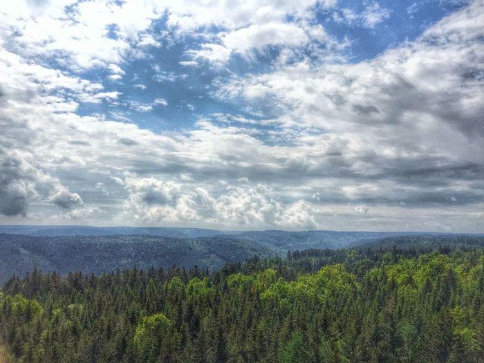 Black Forest Schwarzwald Tadaa Community EyeEm Deutschland EyeEm Nature Lover Eye4photography  Landscape_Collection