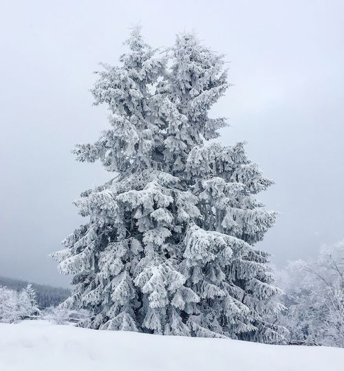 Trees in love 🌲💙🌲 Trees Inlove Embrancing Firs Winter Snow Nature BlackforestCold Temperature Weather Tree Beauty In Nature White Color Tranquility Scenics Tranquil Scene Outdoors No People Day Sky