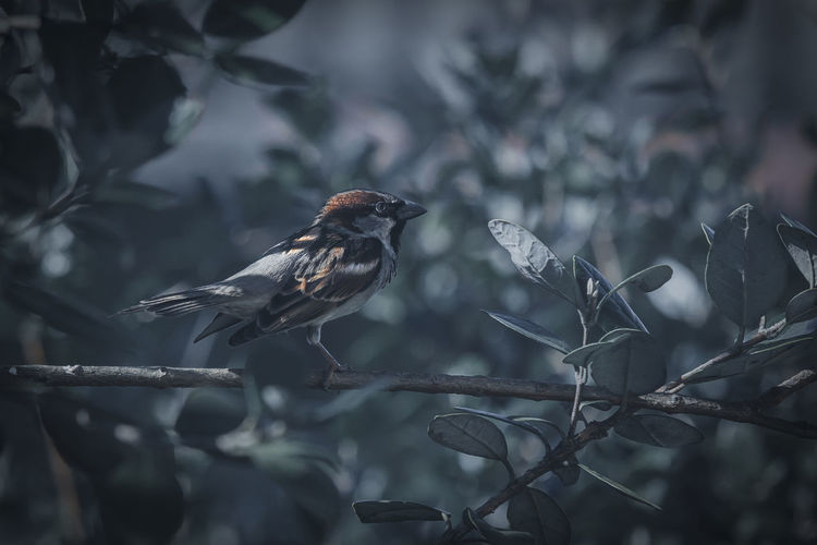 Bird Bird Perching Animals In The Wild Animal Themes Vertebrate Animal Animal Wildlife One Animal Tree Branch Plant Focus On Foreground Selective Focus No People Day Nature Close-up Leaf Plant Part Outdoors Furstyferrret