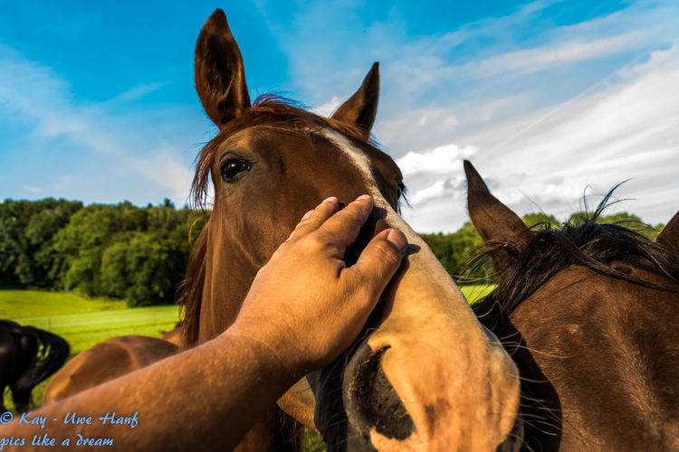 Animal Body Part Close-up Day Domestic Animals Focus On Foreground Horse Horse Looking At Camera Horse Love Horse Lover Horse Lovers Horse Photography  Horses Mammal Nature Nikon Nikon D5500 Nikonphotography Outdoors Sky